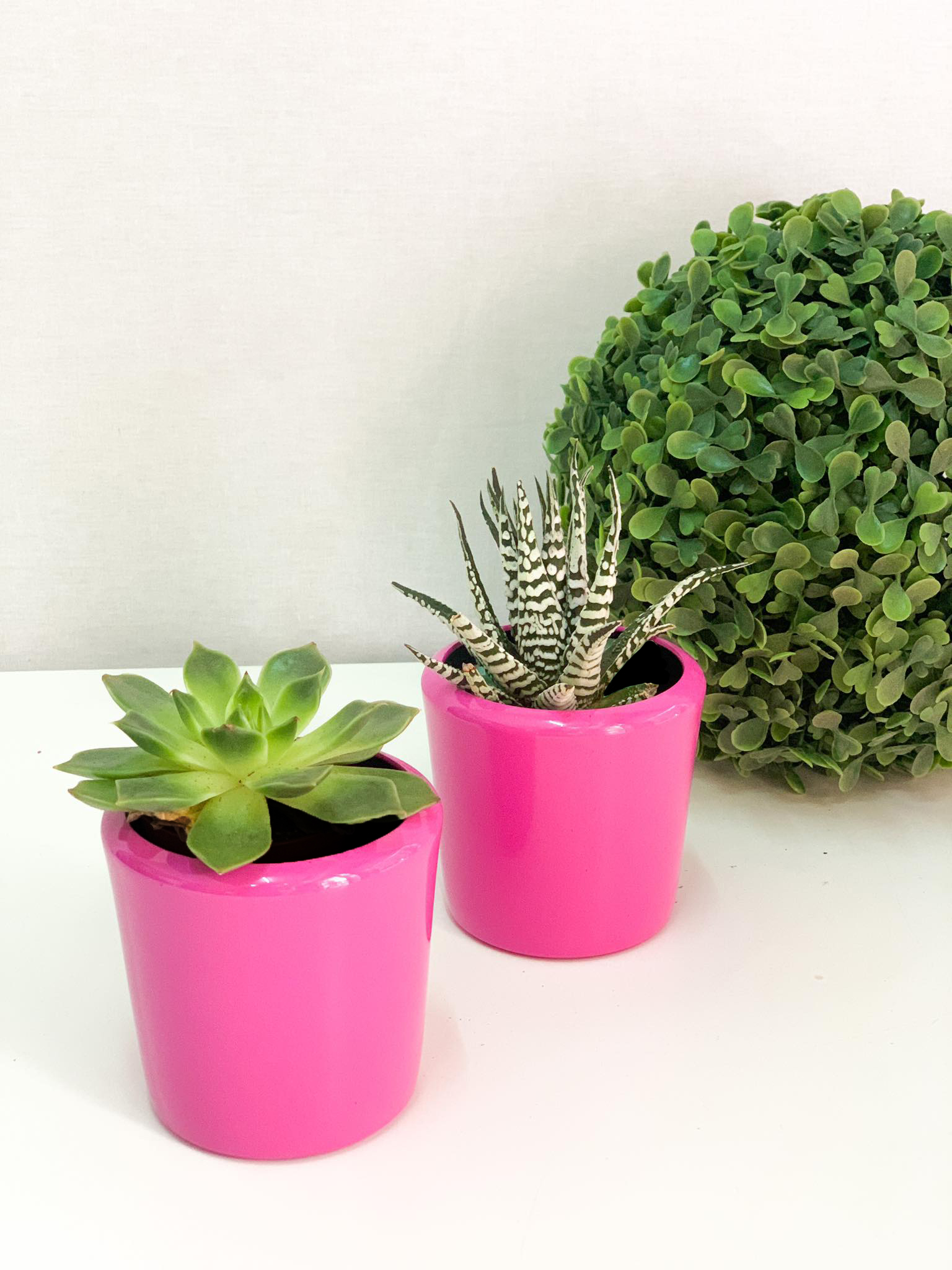 Twin Succulent Gifts Tabrah Flowers Gifts Trading